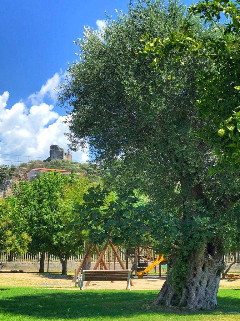 Villa comunale Policastro Bussentino ulivi secolari